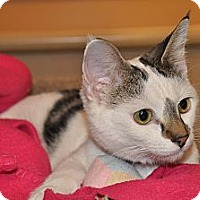 Adopt A Pet :: Jewel - Foothill Ranch, CA