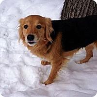 Adopt A Pet :: Aphrodite - Muskegon, MI