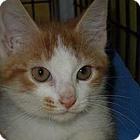 Adopt A Pet :: Boo - Medina, OH