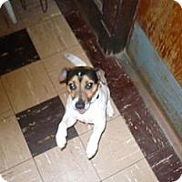 Adopt A Pet :: MERLIN - Wisconsin Dells, WI