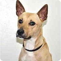 Adopt A Pet :: Summer - Port Washington, NY
