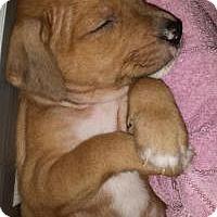Adopt A Pet :: Mars - Marlton, NJ