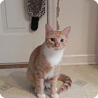 Adopt A Pet :: Oliver - Fayetteville, TN