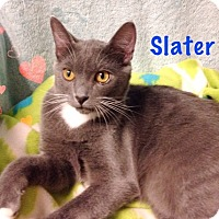 Adopt A Pet :: Slater - Foothill Ranch, CA