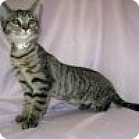 Adopt A Pet :: Lucy - Powell, OH