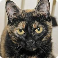 Adopt A Pet :: Olivia - Eastsound, WA