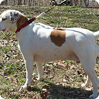 Adopt A Pet :: Champagne - Normandy, TN