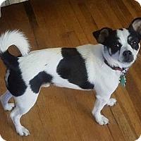 Adopt A Pet :: Cosmo - Toledo, OH