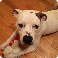 Adopt A Pet :: Annie - nashville, TN