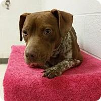 Adopt A Pet :: Mocha - Gulfport, MS