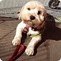 Adopt A Pet :: Chanel (aka Shak) - San Diego, CA