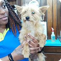 Adopt A Pet :: Poppy (HAS BEEN ADOPTED) - Buffalo, NY