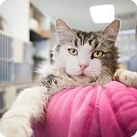 Adopt A Pet :: Fluffy - Montclair, CA