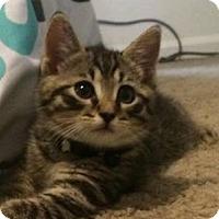 Adopt A Pet :: Catrick Swayze - Gainesville, FL
