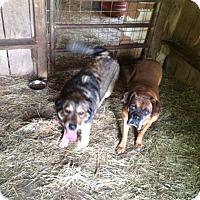 Adopt A Pet :: Meeko - Hohenwald, TN