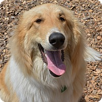 Adopt A Pet :: Toby - Pacific, MO