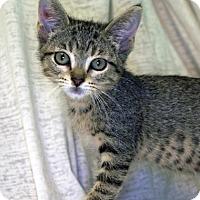 Adopt A Pet :: Raisinette - Austin, TX