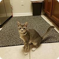 Adopt A Pet :: Marie II P - Orlando, FL