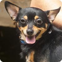 Adopt A Pet :: Gizmo - Woodstock, GA