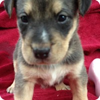 Adopt A Pet :: Jenica - Hagerstown, MD