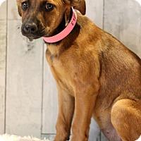 Adopt A Pet :: Resha - Waldorf, MD
