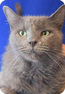 Domestic Shorthair Cat for adoption in Media, Pennsylvania - Church