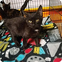 Adopt A Pet :: Carlisle - Huntington, WV