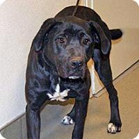 Adopt A Pet :: 322420 - Wildomar, CA