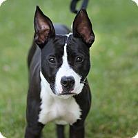 Adopt A Pet :: Max - $25! - Midland, MI