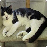 Adopt A Pet :: Oscar - Euclid, OH