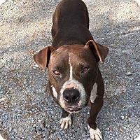 Adopt A Pet :: Remington ($200 adoption fee!) - Albany, NY