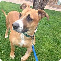 Adopt A Pet :: Yoda - Phoenix, AZ