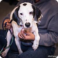 Adopt A Pet :: Kobe - Richmond, VA