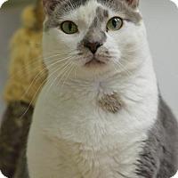 Adopt A Pet :: Emma Jay170102 - Atlanta, GA