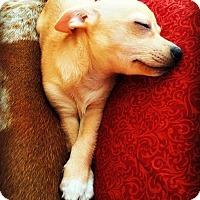 Adopt A Pet :: Tres - Tijeras, NM