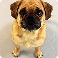 Adopt A Pet :: Dennis - Muskegon, MI
