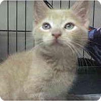 Adopt A Pet :: Sammy - Island Park, NY
