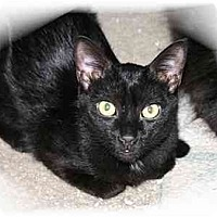 Adopt A Pet :: Timothy - Montgomery, IL