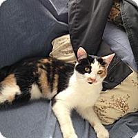Adopt A Pet :: Daisy - Simpsonville, SC