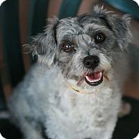 Adopt A Pet :: Millie - Canoga Park, CA