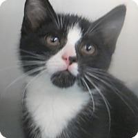 Adopt A Pet :: Logan - Brockton, MA