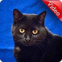 Adopt A Pet :: Mali - Calgary, AB