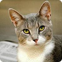 Adopt A Pet :: Anatoly - East Brunswick, NJ