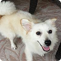 Adopt A Pet :: Rudy - Kingwood, TX