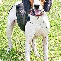 Adopt A Pet :: Bessie - Cashiers, NC