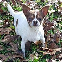 Adopt A Pet :: Lizzy - Plainfield, CT