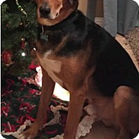 Adopt A Pet :: Murphy - Avon, NY