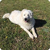 Adopt A Pet :: Yukon - Tulsa, OK