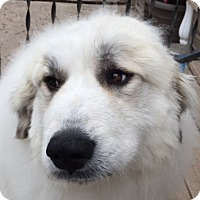 Adopt A Pet :: Lucy - Minneapolis, MN