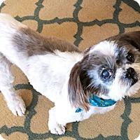 Adopt A Pet :: JB - Umatilla, FL